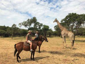 Hessel en Dilo met een giraffe tijdens een safari te paard