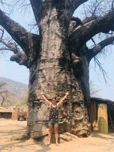 Dilo naast een Baobab boom